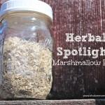 Herbal Spotlight: Marshmallow Root