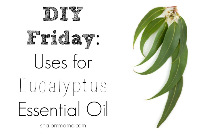 DIY Friday Uses for Eucalyptus Essential Oil